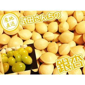 ぎんなん 銀杏 鳥取県産 新物! 某高級料亭で使用されている武田さんちの銀杏 本当に美味しいです!ぎんなん ギンナン L〜3Lサイズ 送料無料