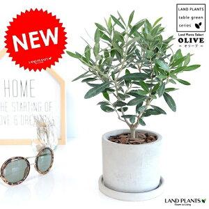 オリーブセメントシリンダー陶器鉢鉢植え陶器コンクリポット丸形グレー灰色灰オリーブの木観葉植物苗苗木