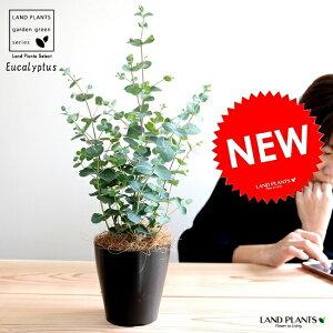 【お試し】ユーカリ(グニー)4号黒色プラスチック鉢鉢植えプラ鉢ブラック黒ユーカリの木ユーカリプタスフトモモグニコアラインテリアバーク観葉植物