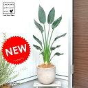 【バルコニスト 推奨item】 NEW!! ストレリチア・レギネ 極楽鳥花 デザインの良いテラコッタの ストレチア ゴク…