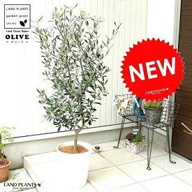 オリーブ 8号 (白色) セラアート鉢 鉢植え オリーブの木 苗 苗木 鉢 白 ホワイト プラスチック 大型 丸 ココヤシファイバー 観葉植物