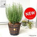 ローズマリー ウッドバレル プランター (茶色) 立性 鉢植え 苗 苗木 ローズマリ ハーブ ハーヴ 木製プランター 茶 …