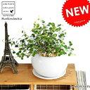 NEW!! ワイヤープランツ 白色丸型陶器に植えた つる性の植物 ワイヤーバイン table green series 敬老の日 ポ…
