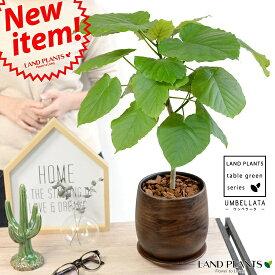 ウンベラータ ウッド風 ペイント陶器鉢 Mサイズ 【観葉植物】 数量限定! 茶色・ブラウン・陶器鉢・植木鉢