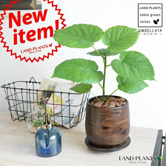 ウンベラータ ウッド風 ペイント陶器 Sサイズ 【観葉植物】 茶色・ブラウン・陶器鉢・植木鉢