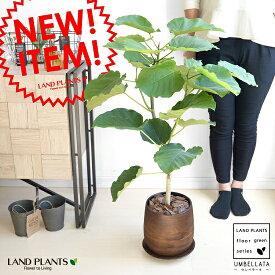 ウンベラータ ウッド風 ペイント陶器 (Lサイズ) 8号 大型【観葉植物】 茶色・ブラウン・陶器鉢・植木鉢 ウッドペイント