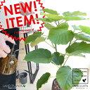 ウンベラータ ウッド風ブラウン陶器 Lサイズ 8号 大型【観葉植物】 茶色・ブラウン・陶器鉢・植木鉢