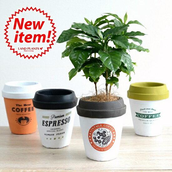 【4カラー】 コーヒーの木 コーヒーカップ型 陶器鉢 Mサイズ チルドカップコーヒーノキ・3号・4号・植木鉢・底穴あり・フラワーポット 白・黒・青・オレンジ・ミント・ネイビー・グリーン