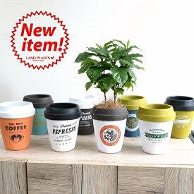 【8カラー】 コーヒーの木 コーヒーカップ型 陶器鉢 Mサイズ チルドカップコーヒーノキ・3号・4号・植木鉢・底穴あり・フラワーポット 白・黒・青・オレンジ・ミント・ネイビー・グリーン