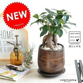 ガジュマル (幹太タイプ) ウッド風 ペイント陶器鉢 Sサイズ 幸福をもたらす 多幸の樹 精霊 がじゅまるの木 鉢植え 鉢 丸鉢 ブラウン 茶色 茶 こげ茶