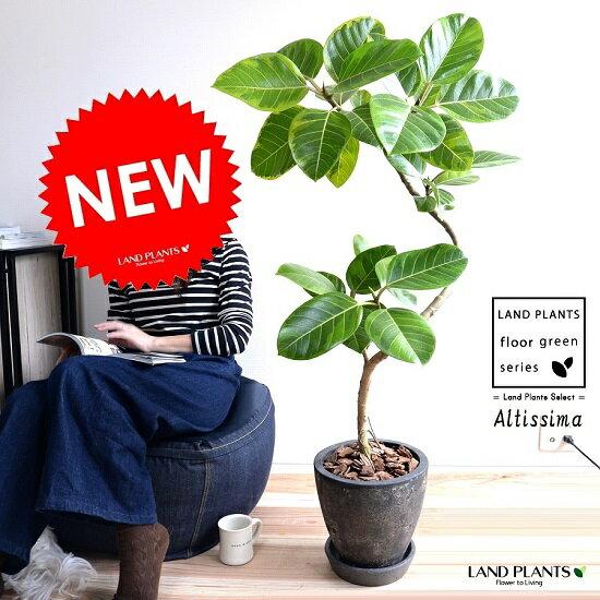 アルテシーマ 3Dカーブ (曲がり) エッグ型 ラウンド 陶器鉢 (黒色) 鉢植え 大型 斑入り ゴム ゴムの木 葉模様 黒 ブラック 丸 観葉植物 丸い葉 送料無料