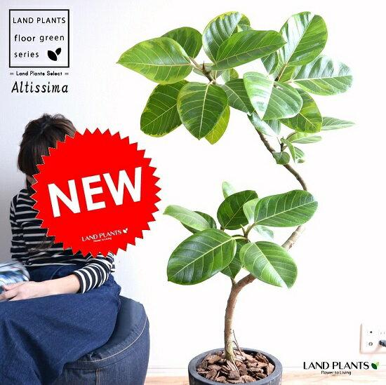 アルテシーマ 3Dカーブ (曲がり) 黒色 エッグラウンド 陶器鉢 鉢植え 大型 斑入り ゴム ゴムの木 葉模様 黒 ブラック 丸 観葉植物 丸い葉 送料無料