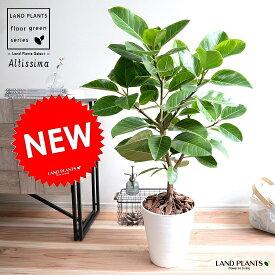 アルテシーマ (自然樹形) 白色 セラアート鉢 8号 鉢植え 大型 斑入り ゴム ゴムの木 葉模様 白 ホワイト 丸 観葉植物 丸い葉 送料無料
