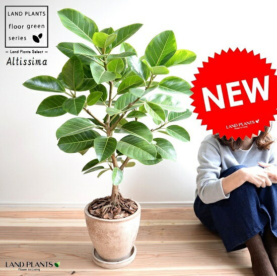 アルテシーマ (自然樹形) 茶色 エッグ型 ラウンド 陶器鉢 8号 鉢植え 大型 斑入り ゴム ゴムの木 葉模様 茶 ブラウン 砂色 ベージュ 丸 観葉植物 送料無料