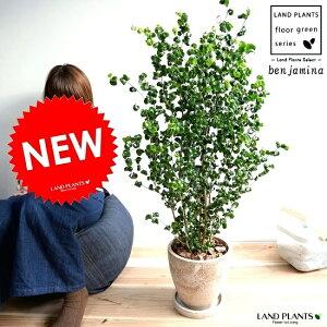 ベンジャミン (バロック) 茶色 エッグ型 ラウンド 陶器鉢 8号 鉢植え 鉢 苗 苗木 大型 観葉植物 茶 ブラウン 砂色 ベージュ ラウンド 丸 送料無料