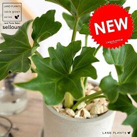 セローム セメント シリンダー型 陶器鉢 鉢植え 鉢 苗 苗木 なえ 観葉植物 送料無料 灰 灰色 グレー 丸 ラウンド
