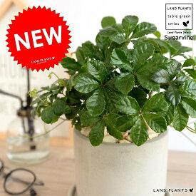 シュガーバイン セメント シリンダー型 陶器鉢 鉢植え 鉢 苗 苗木 なえ 観葉植物 送料無料 灰色 灰 グレー ねずみ 丸 ラウンド
