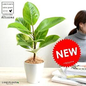 【お試し】 アルテシーマ 4号 白色 プラスチック鉢 アルティシマ バリエガータ 斑入り 黄色い葉 鉢植え 苗木 苗 白 ホワイト 丸形