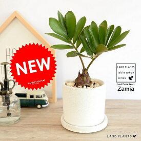 ザミア (プミラ) 白色 シリンダー型 陶器鉢 ヒロハザミア・メキシコソテツ 観葉植物 鉢植え 鉢 苗 苗木 なえ 白 ホワイト クリーム 丸 ラウンド
