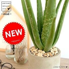 アロエベラ セメント シリンダー型 陶器鉢 アロエ ベラ 鉢植え 鉢 苗 苗木 観葉植物 送料無料 灰色 灰 グレー ねずみ 丸 ラウンド