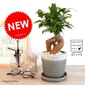 ガジュマル(幹太タイプ) やさしい色合い 陶器鉢 (灰色) 鉢植え 陶器鉢 鉢 苗 苗木 灰 グレー チャコール ラウンド 観葉植物 送料無料