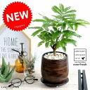 エバーフレッシュ ウッド風 ペイント陶器鉢 Sサイズ 鉢植え 鉢 苗 苗木 観葉植物 送料無料 丸鉢 鉢植え 陶器 木目 茶 …