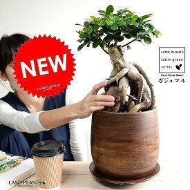 ガジュマル(超幹太) ウッド風 ペイント陶器鉢 Lサイズ 幸福をもたらす 多幸の樹 精霊 がじゅまるの木 鉢植え 鉢 丸鉢 ブラウン 茶色 茶 こげ茶 ウォールナット 観葉植物 送料無料