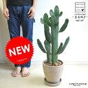 new!! サボテン 墨烏帽子 茶色エッグポット植えた ウチワサボテン 多肉植物 スミエボシ バンザイサボテン カク…