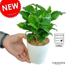 【お試し】 コーヒーの木 4号 白色 プラスチック鉢 鉢 鉢植え 苗 なえ 苗木 観葉植物 coffee 珈琲 コーヒーノキ ドリップ カップ 白 ホワイト 丸 ラウンド