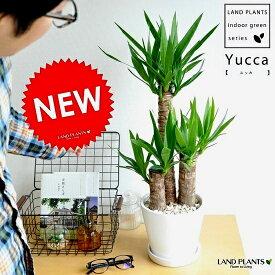 青年の木 ドラセナ(ユッカ) 白色 中型ラウンド 陶器鉢 リュウゼツラン ドラセナユッカ 敬老の日 ポイント消化 観葉植物