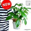 【お試しサイズ】 NEW!! ヤッコカズラ 葉の形ヤッコさん型の植物 4号サイズ フィロデンドロン やっこ凧 紅ヤッ…