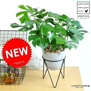 変わった植物をお探しの方にはピッタリです!