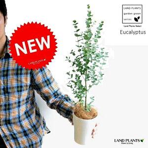 【季節限定商品】 New!! ユーカリ・グニー 4号サイズ 苗から育てよう♪ 4号サイズ ユーカリプタス フトモモ 鉢植え 敬老の日 ポイント消化 観葉植物