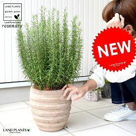 ローズマリー 鉢植え アンティークブラウン鉢 虫除け 虫よけの木 立性 敬老の日 ポイント消化 観葉植物