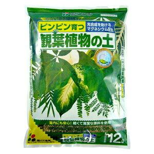 【小袋】 観葉植物の土 2L 失敗しない。失敗させない。ピンピン育つ 専用用土シリーズ ウンベラータ ガジュマル 敬老の日 ポイント消化 観葉植物