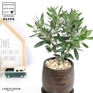 オリーブ ウッドペイント 陶器鉢 ラウンド S 陶器 植木鉢 丸形 丸 ブラウン 茶 茶色 オリーブの木 観葉植物 苗 苗木