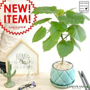 ウンベラータ 青色 ラチス模様 ラウンド型 陶器鉢 ブルー  【観葉植物】 5号・6号・青色陶器鉢 植木鉢