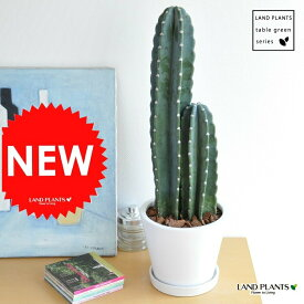 new!! 柱サボテン 白色シンプルデザイン陶器鉢に植えた サボテン カクタス C4カクタス 敬老の日 ポイント消化 観葉植物