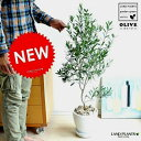 NEW!! オリーブ 白色エッグポット植えた オリーブの木 鉢植えオリーブ 【楽ギフ_メッセ】【楽ギフ_メッセ入力】…