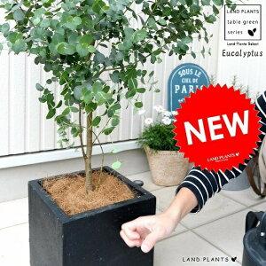 ユーカリ・グニー 黒色 ファイバー キューブ ポット 鉢植え 大型 ポリアンセモス ユーカリの木 ユーカリプタス フトモモ 鉢 灰 黒 ブラック 正方形 四角 スクエア ハートの葉 観葉植物 送料