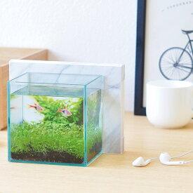 育てる水草 アクアスマホリウム【アクアリウム】【スマホ再利用】【インテリア】【栽培セット】