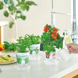 フレッシュフィール【栽培キット】【野菜】【キッチン】【プレゼント】【聖新陶芸】