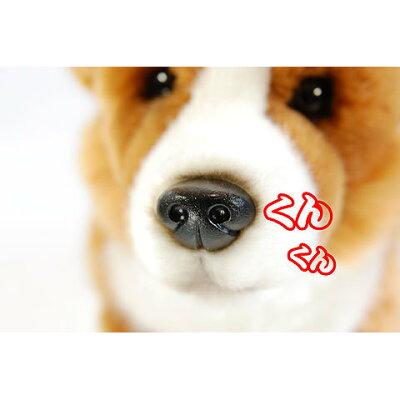 コーギーのぬいぐるみひっつぅ〜くん大♪犬のぬいぐるみイギリス生まれの犬グッズ犬雑貨おもちゃプレゼントにおすすめギフトプレゼント贈り物誕生日記念日縫いぐるみ通販楽天プレゼントギフトお返し父の日ルシアン