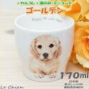 わんコレ 湯飲み ゴールデン(犬食器 犬モチーフ 犬グッズ 犬雑貨 プレゼントにおすすめ 日本製 食器)(プレゼント ギフ…