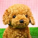 トイプードルのぬいぐるみ お座り(スターチャイルド)(犬 おもちゃ プレゼントにおすすめ ギフト 誕生日 記念日 バースデー かわいい 可愛い イヌ 結婚祝い 出産祝い) 卒業式 プレゼント ギフト