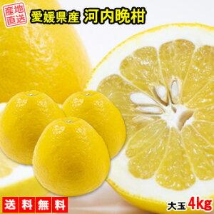 河内晩柑 みかん 4kg 送料無料 大玉 ご家庭用 箱買い 柑橘 フルーツ 果物 産地直送 愛媛県産