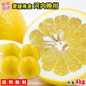 河内晩柑 みかん 4kg 送料無料 中玉 ご家庭用 箱買い 柑橘 フルーツ 果物 産地直送 愛媛県産
