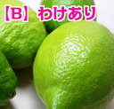 【グリーンレモン】【わけあり】広島県尾道市瀬戸田町産レモン 3kg 【ノーワックス】【防腐剤・防かび剤不使用】【…