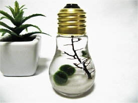小さな電球まりも(小)まりも マリモ 毬藻 水草 アクアリウム インテリアグッズ 癒しグッズ インテリア 初心者 手軽 癒し かわいい オシャレ