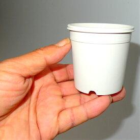 2.5号 シンプルプラスチック鉢